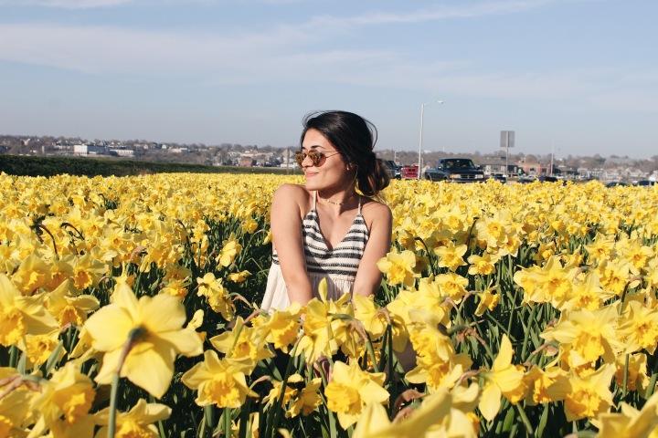 Daffodil Field! 🌼 Newport,RI